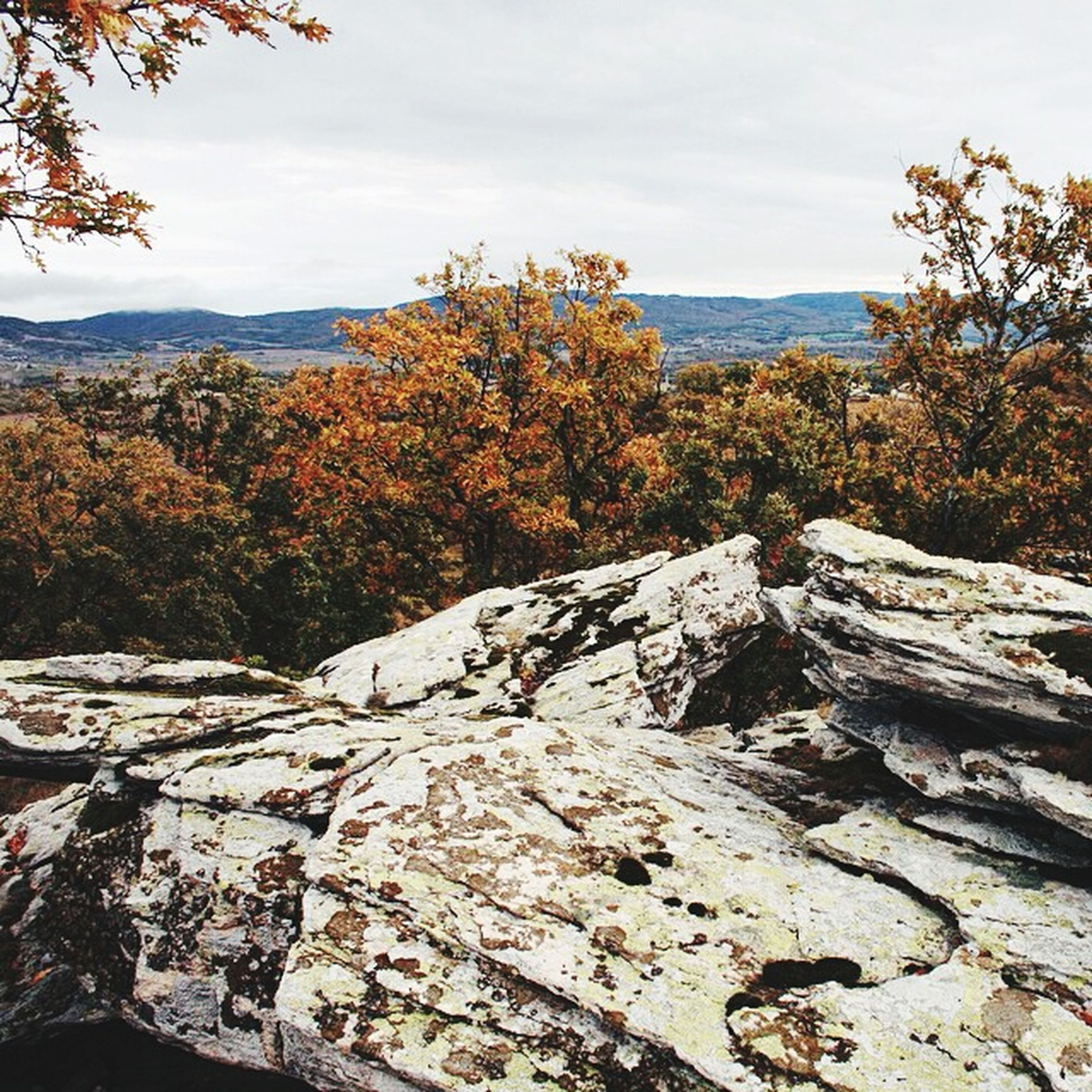 tree, tranquility, tranquil scene, sky, beauty in nature, scenics, nature, rock - object, landscape, growth, autumn, mountain, day, idyllic, no people, non-urban scene, outdoors, branch, cloud - sky, change