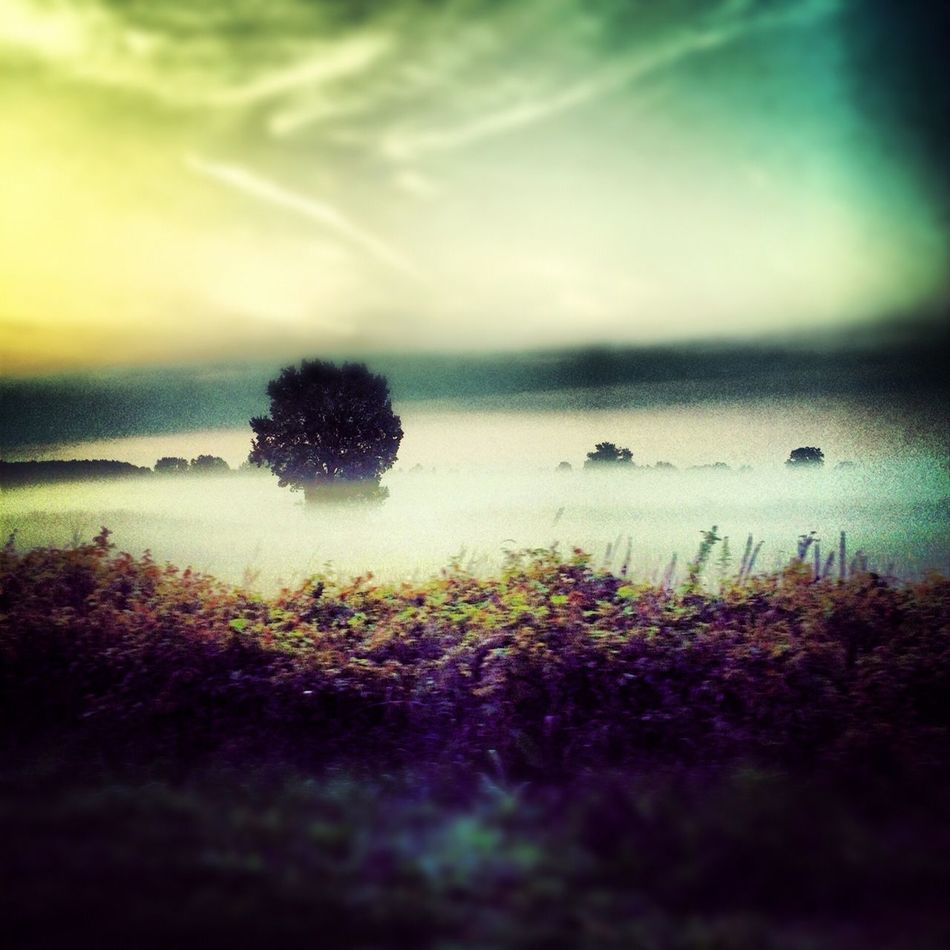 Fog Landscape Field Sunrise