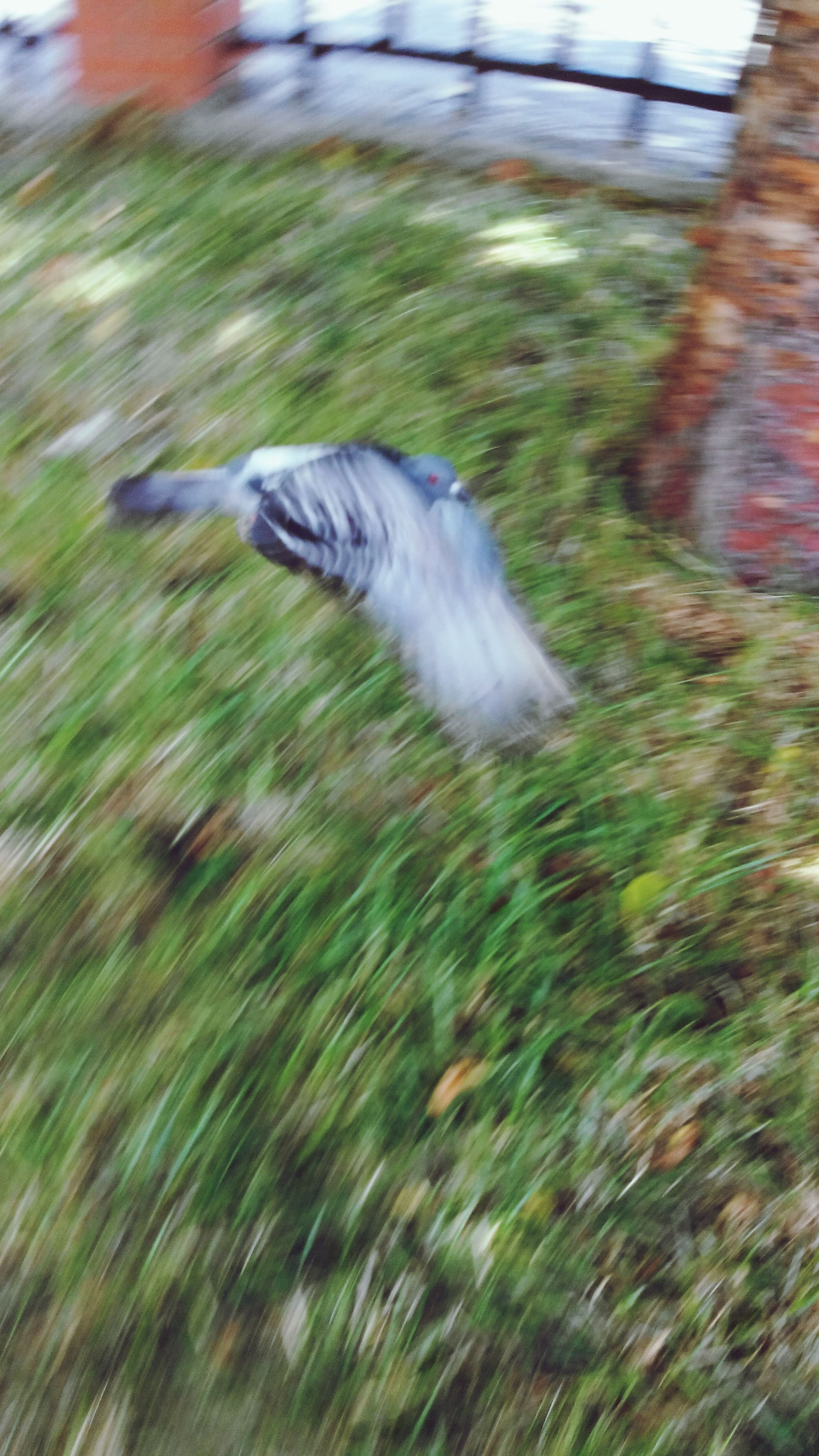 one animal, focus on foreground, animal themes, motion, selective focus, close-up, grass, bird, blurred motion, feather, day, outdoors, animals in the wild, field, wildlife, no people, side view, nature, long exposure, full length