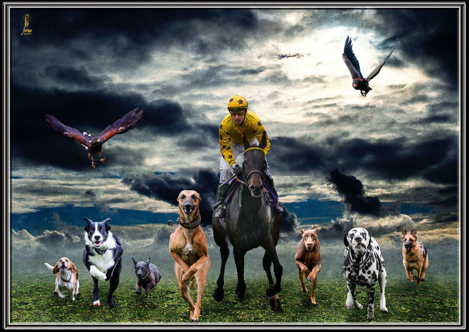 Animal Animal Themes ArtWork Composing Coursing Dogs Horse Racing