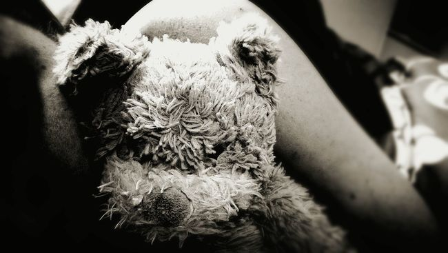 Teddylove Sleep Peace And Quiet First Eyeem Photo