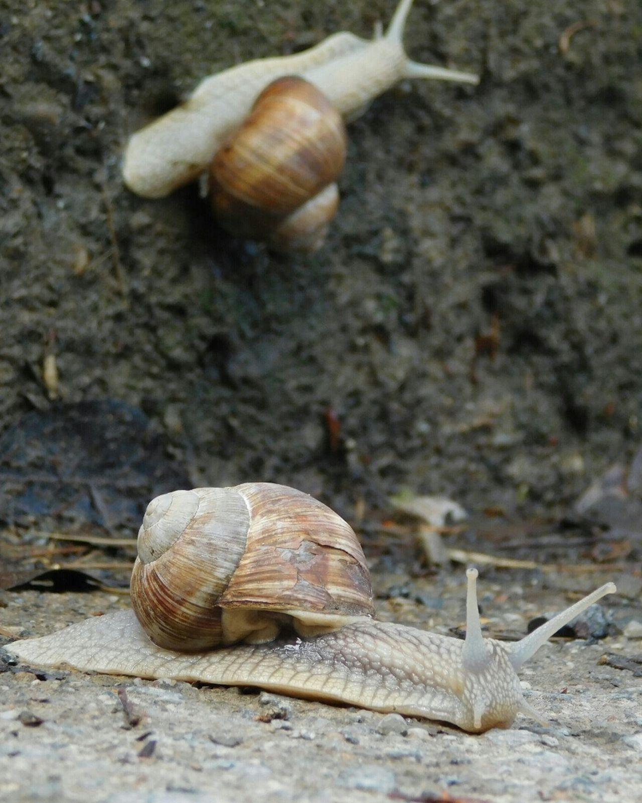 Snail Animal Shell Animal Themes Gastropod Animals In The Wild Animal Wildlife Close-up Outdoors Nature Sea Life Sand Macro Photography Macro Beauty Macro Nature Macrophotography Macro_captures Oradea,România