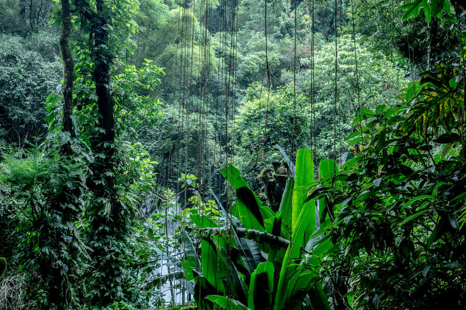 Backgrounds Bamboo Grove Beauty In Nature Day Forest Freshness Green Color Growth Jungle Leaf Lush - Description Lush Foliage Mexico Nature Nature Nature Photography No People Outdoors Plant Rainforest San Luis Potosí Tree Xilitla