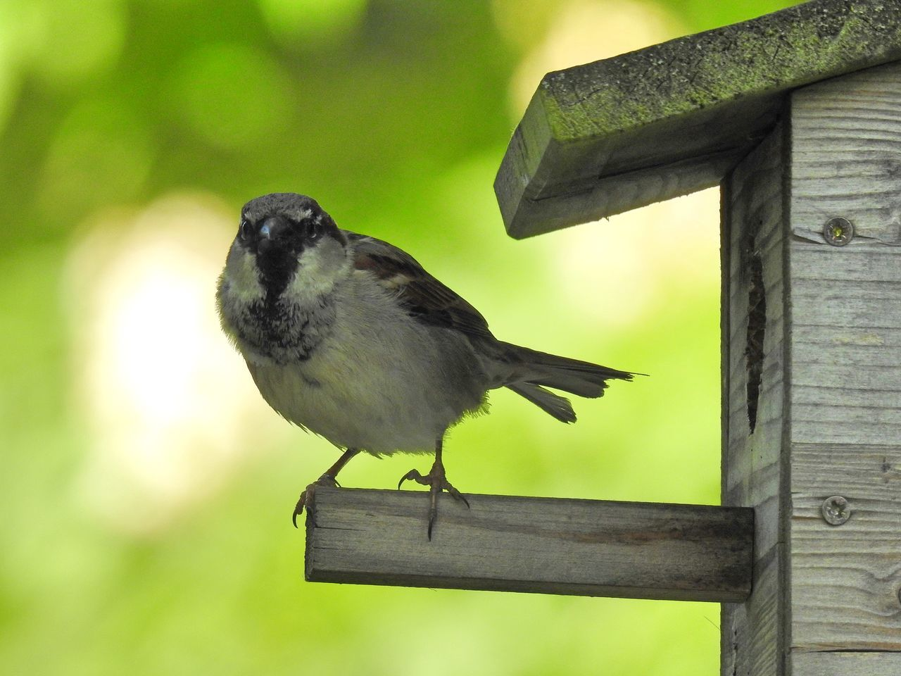 Alertness Animal Themes Animal Wildlife Animals In The Wild Bird Bird Photography Birds_collection Close-up Day Focus On Foreground Nature Nature Photography Nature_collection Naturelovers No People One Animal Outdoors Perching Sparrow Wood - Material
