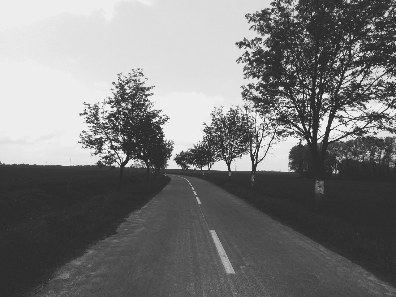 Way Road Landscape Day No People Tree 2017 The Way Forward Tree Sky Outdoors Nature First Eyeem Photo