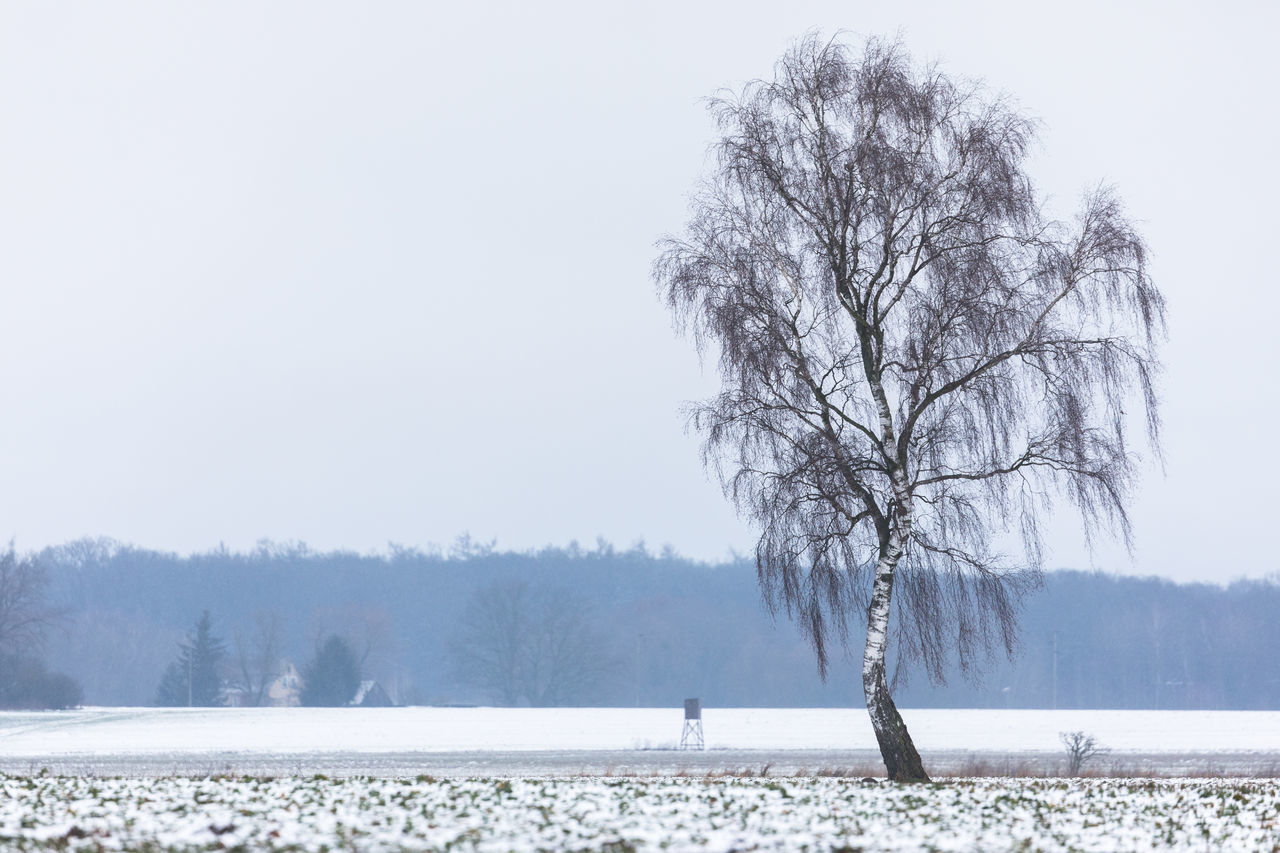 Bare Tree Beauty In Nature Birch Tree Branch Cold Temperature Copy Space Day Focus On Foreground Forrest Growth Landscape Nature No People Outdoors Overcast Scenics Single Tree Sky Snow Snowing Solitude Tranquility Tree Water Winter