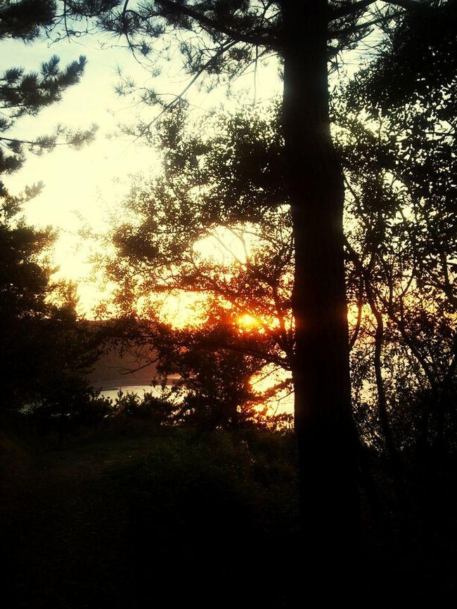 Sunset Nature Trees