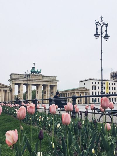 Spring at Brandenburg Gate, Berlin Flower Architecture Building Exterior Built Structure Outdoors Clear Sky Day Plant No People Nature Fragility Blooming Freshness City Sky Flower Head Berlin Brandenburg Gate Spring Springtime Neighborhood Map Berlin Love