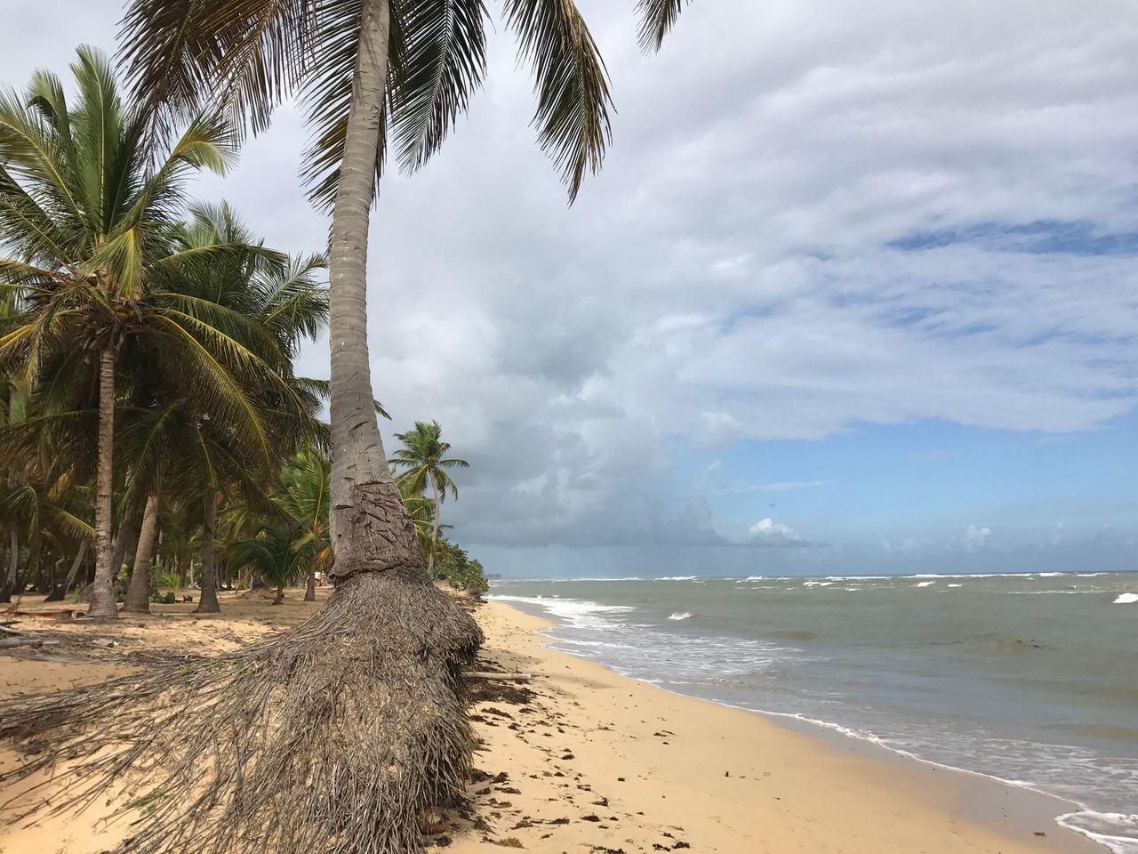 Ocean view Ocean View Palm Tree Scenics Tranquil Scene Beach Beauty In Nature Dominican Republic Sand Palm Tree Cloud - Sky Seascape Seaside Sea Summer Summertime Summer Views