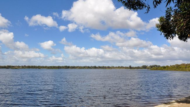 Peaceful lake view under a blue sky with clouds in Bibra Lake, Western Australia Bibra Lake Western Australia Blue Calm Cloud - Sky Cumulus Cloud Day Horizontal Idyllic Lake Landscape Nature No People Outdoors Peaceful Quiet Rippled Scenics Sky Sunny Tranquility Tree Water Waterfront Western Australia Wetland