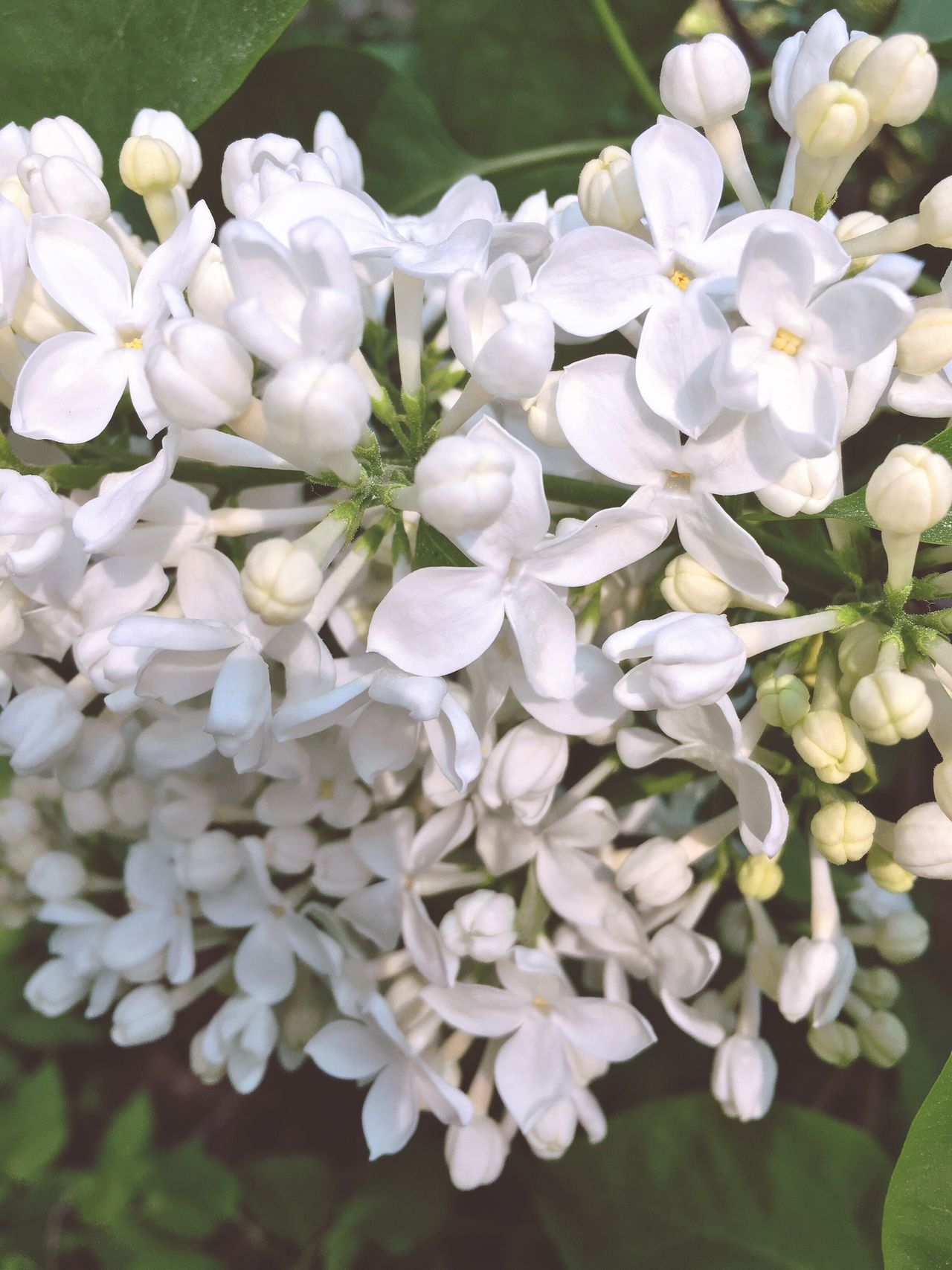 Flower Freshness Nature Beauty In Nature White Color Growth Petal Blooming Close-up Fragility Springtime Day Flower Head Outdoors Plant No People