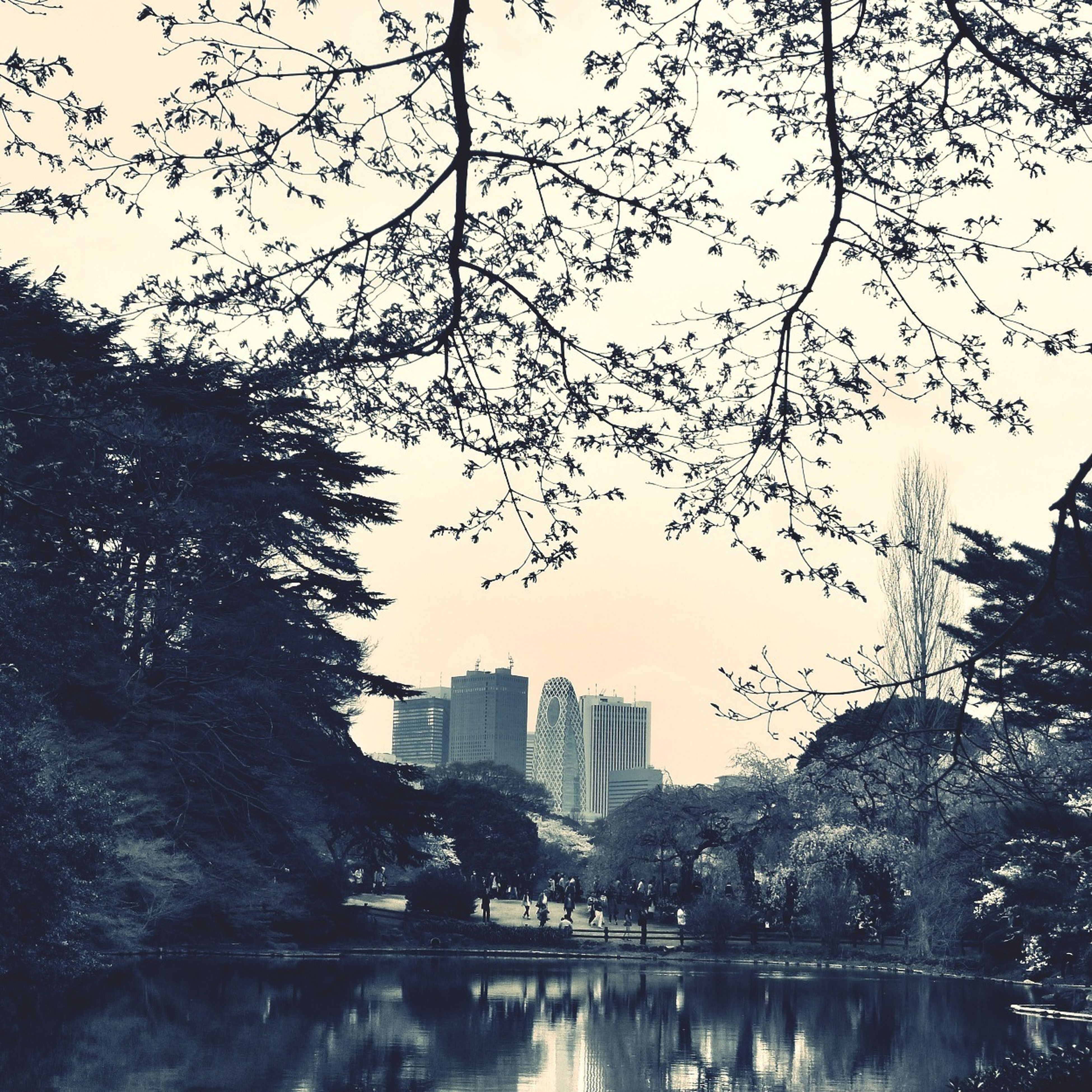 building exterior, architecture, built structure, water, city, tree, reflection, waterfront, river, skyscraper, building, cityscape, clear sky, residential building, sky, branch, tall - high, office building, tower, lake