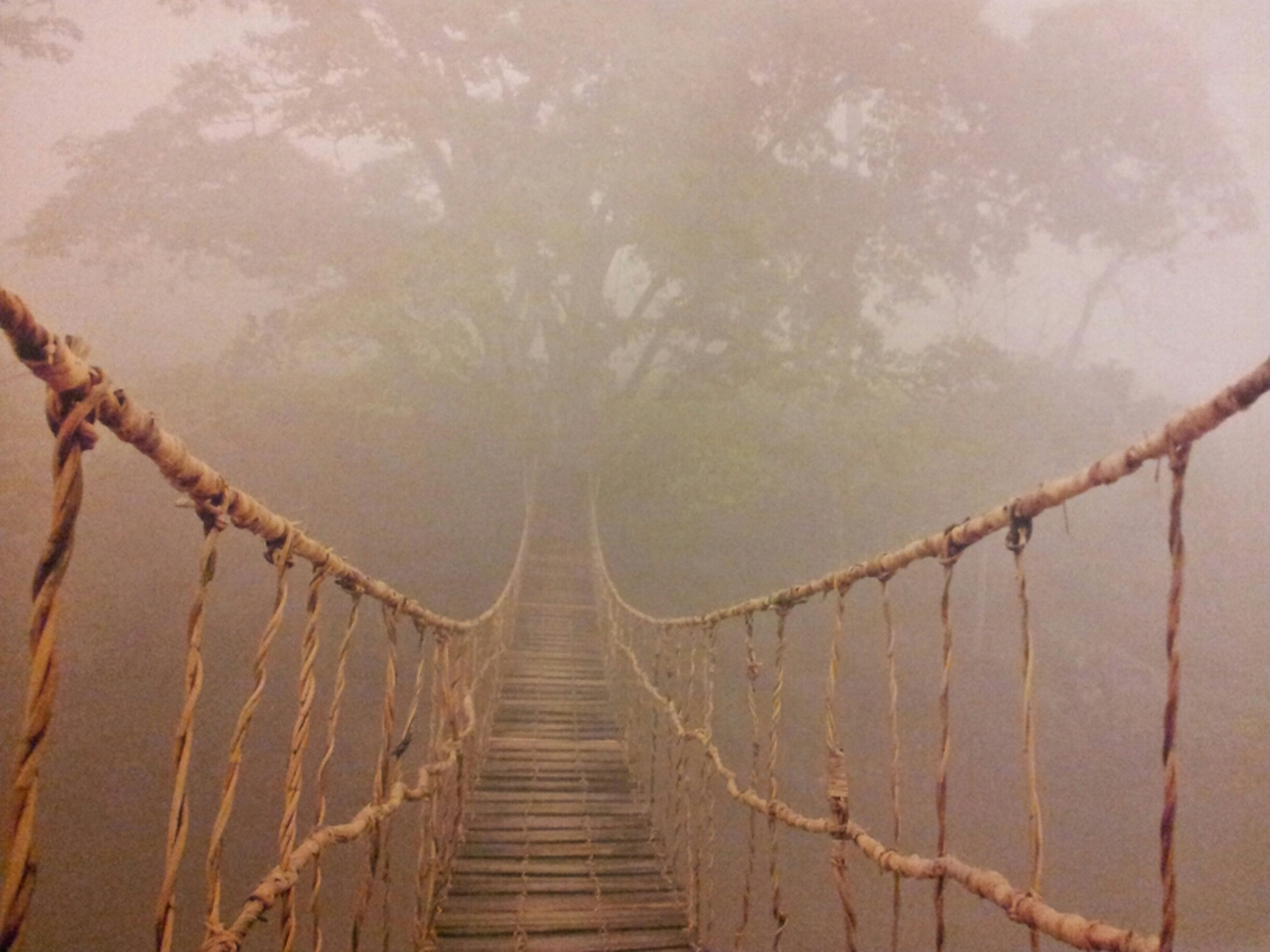 the way forward, wood - material, tree, tranquility, railing, nature, diminishing perspective, branch, sky, tranquil scene, outdoors, forest, beauty in nature, day, weather, footbridge, no people, fog, vanishing point, boardwalk