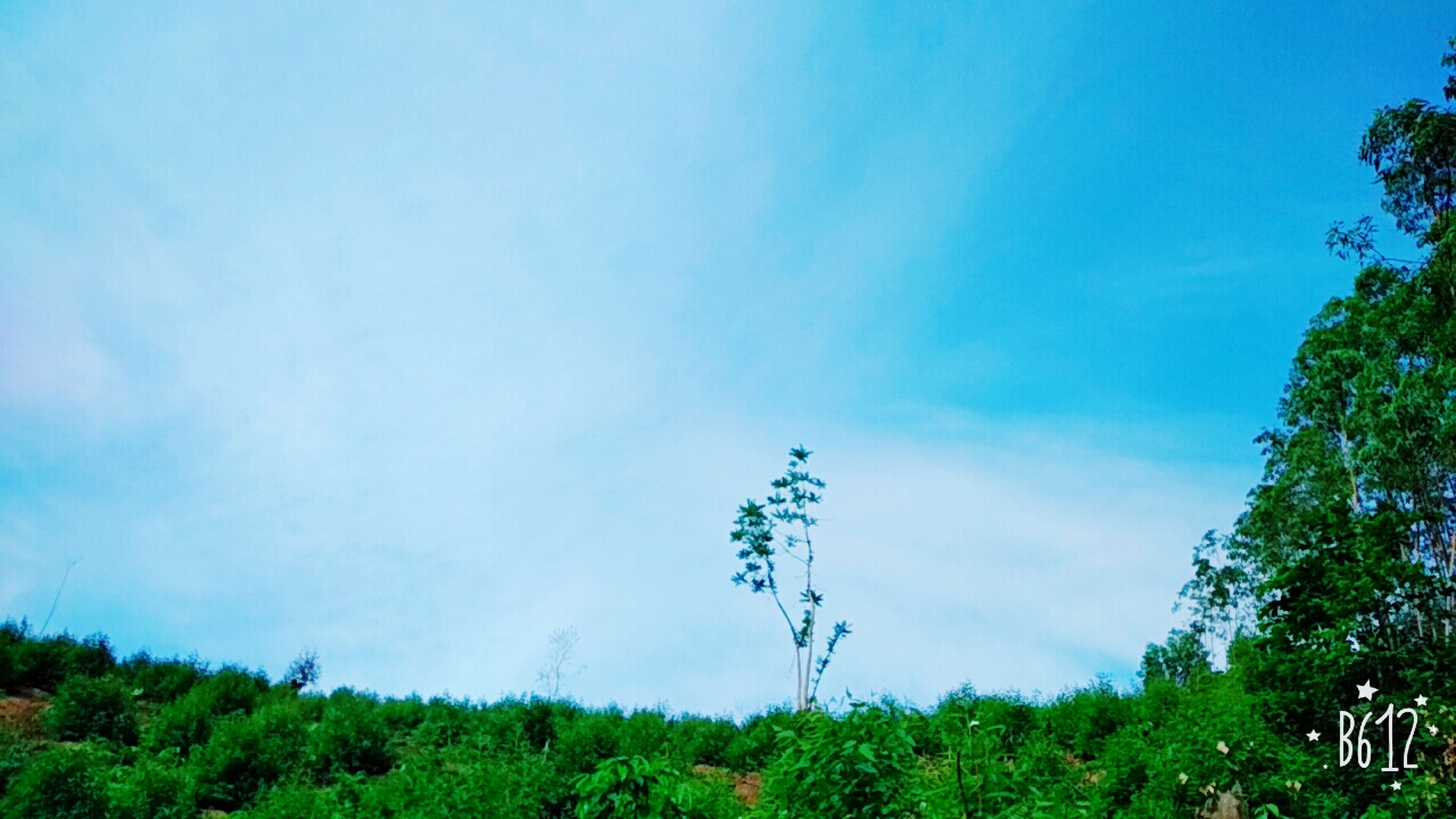 nature, tree, growth, beauty in nature, green color, day, tranquil scene, plant, outdoors, field, tranquility, blue, no people, grass, scenics, landscape, rural scene, animal themes, sky