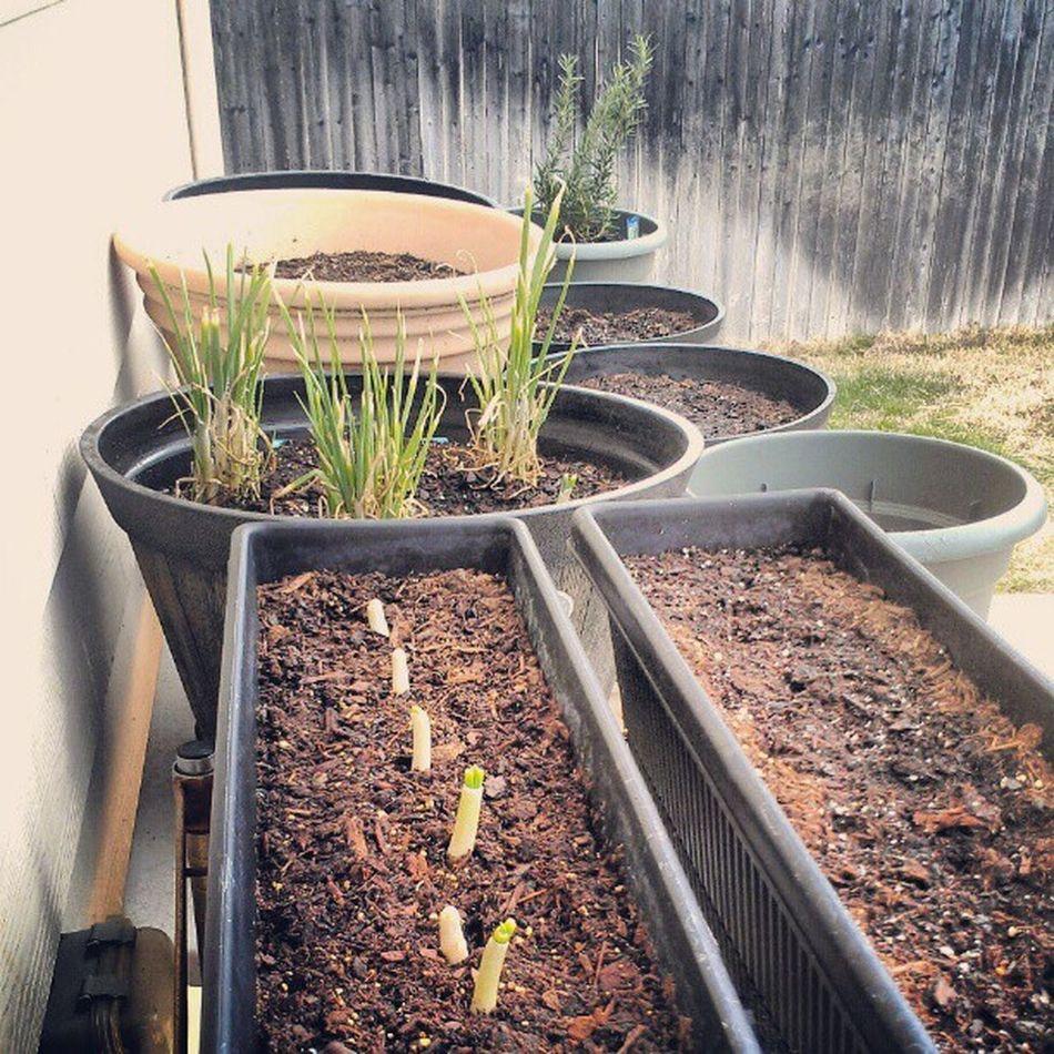 grow my pretty babies Containergardening