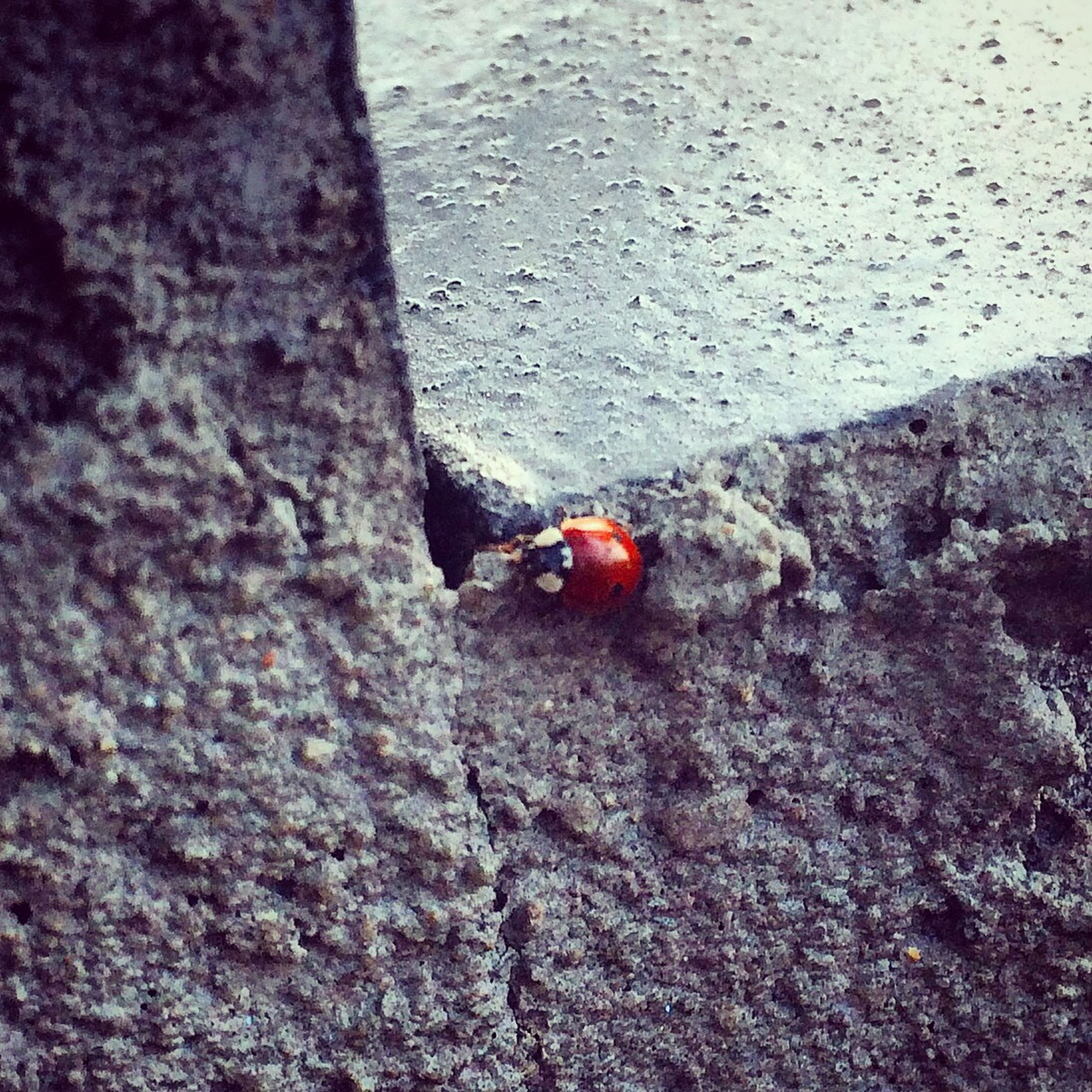 insect, one animal, animal themes, textured, rock - object, animals in the wild, wildlife, high angle view, ladybug, red, nature, rough, full length, day, outdoors, close-up, rock, selective focus, no people, sunlight