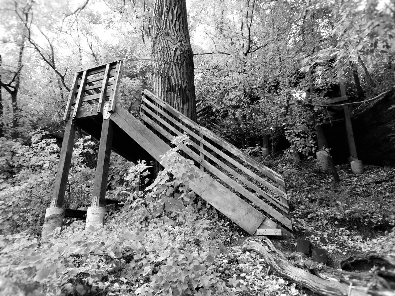 St. Anthony Main trails in Minneapolis MN Black & White Black And White Black And White Collection  Black And White Photography Black And White Portrait Day Fall Nature No People Outdoors Tabphotography Tree Wood Wood - Material