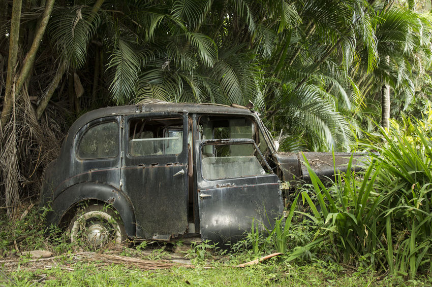 overgrown car in jungle Automobile Backyard Forgotten Glitch Junk Malfunction Plants Trees Abandoned Break Down Broken Forest Jungle Land Vehicle Lush Green Old Car Oldtimer Outdoor Palmtrees Rusty Autos Scrap Vehicle