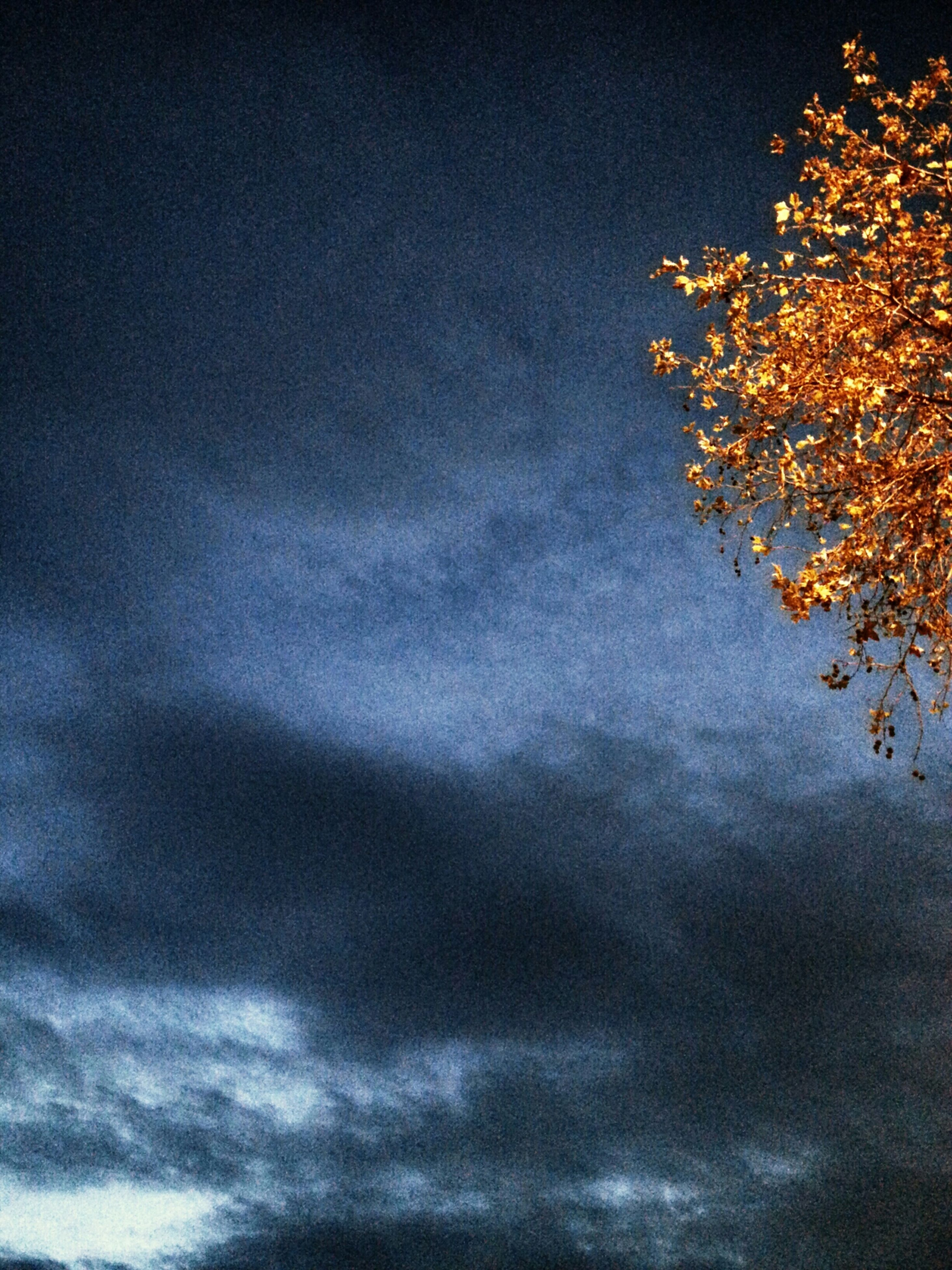 sky, low angle view, cloud - sky, beauty in nature, tranquility, scenics, nature, cloudy, tranquil scene, tree, cloud, weather, idyllic, overcast, outdoors, no people, blue, dusk, cloudscape, growth