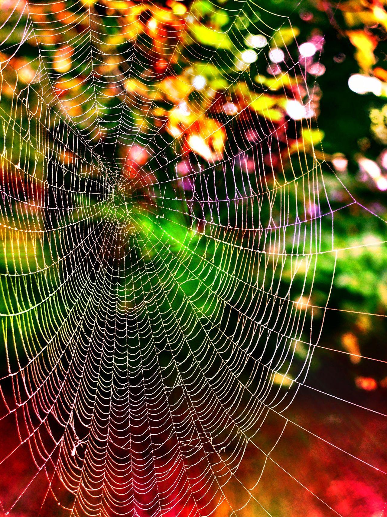 Wood Nature Spiderweb Spider Stadtwald  Decksteinerweiher