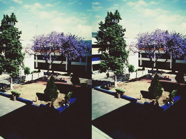 Studying Beautiful Day