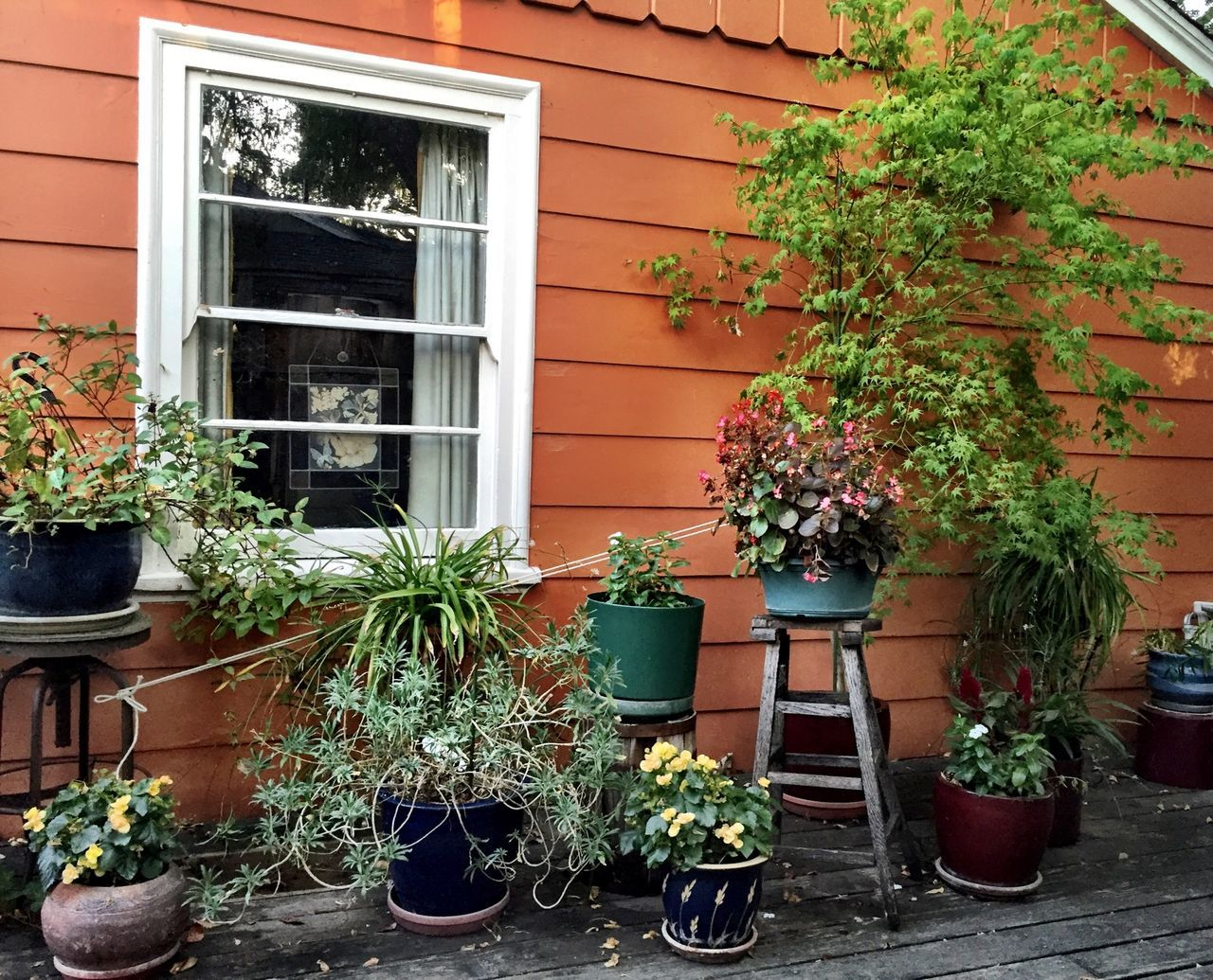 plant, growth, potted plant, house, window, architecture, flower, building exterior, window box, outdoors, no people, nature, day