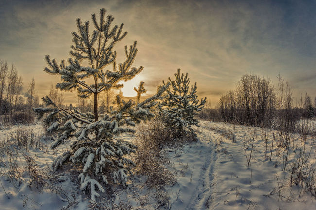 Sunset in the winter forest. Beauty In Nature Clouds Cold Temperature Coniferous Tree Evening Evergreen Landscape Nature No People Nobody Outdoors Park Pathway Russia Sky Snow Sunset Sunshine Trail Tree Weather Winter WoodLand