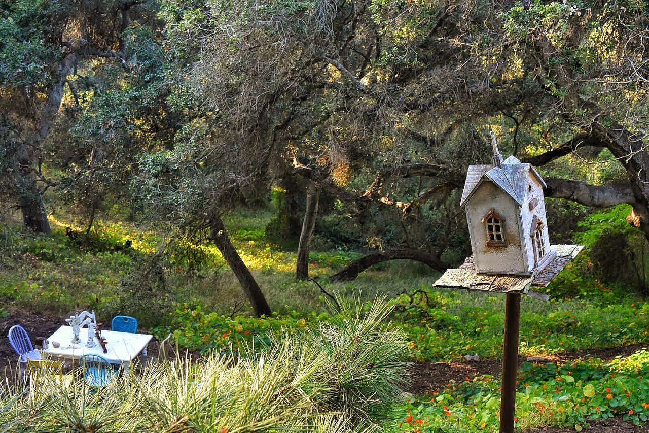 Santa Barbara Tree Nature my garden My Garden @my Home Outdoors Birdhouse Enjoying The Moment Lifestyles Happiness