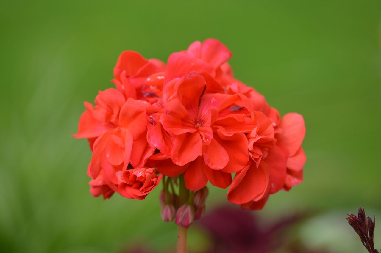 Nature On Your Doorstep Flowers Red Green Bright Beauty Nature Alive