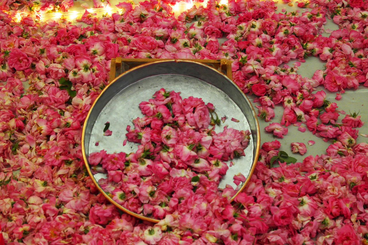 Flower High Angle View No People Pink Color Petal Nature RedClose-up Beauty In Nature Rose Petals Flower Head Freshness
