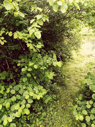 Water River Gap Nature Bushes Trees Alley Of Trees Rural Lithuania Vintage Filter