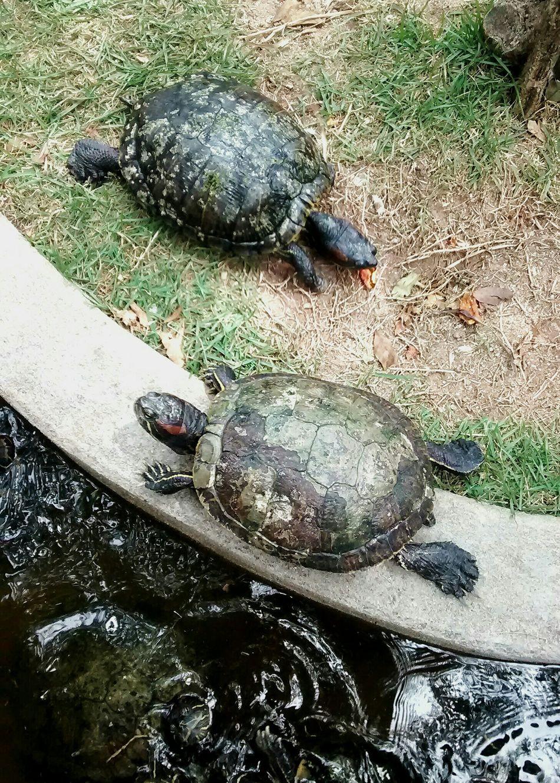 Turtles(: TurtlePower