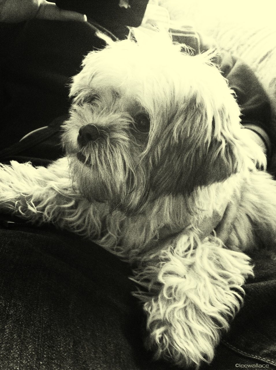 pets, domestic animals, dog, one animal, mammal, animal themes, indoors, animal hair, close-up, no people, relaxation, day