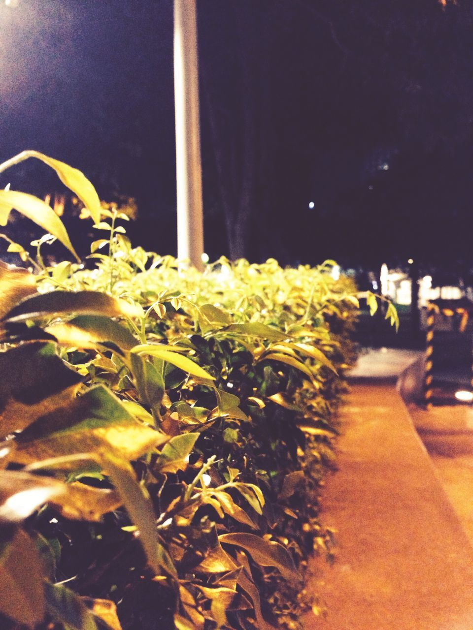 flower, growth, plant, nature, night, outdoors, no people, fragility, freshness, beauty in nature, close-up, flower head