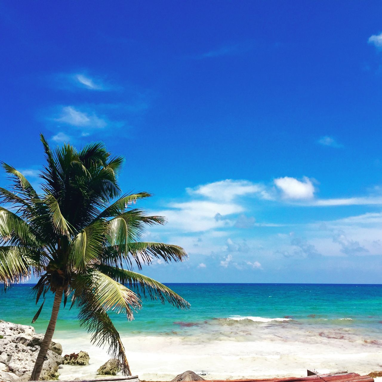 Hotel La Piedra, Tulum, Mexico Beach Beauty In Nature Blue Cloud - Sky Day Horizon Over Water Nature Outdoors Palm Tree Sand Scenics Sea Sky Tranquil Scene Tranquility Tree Tulum Tulum , Rivera Maya. Tulum Beach Water