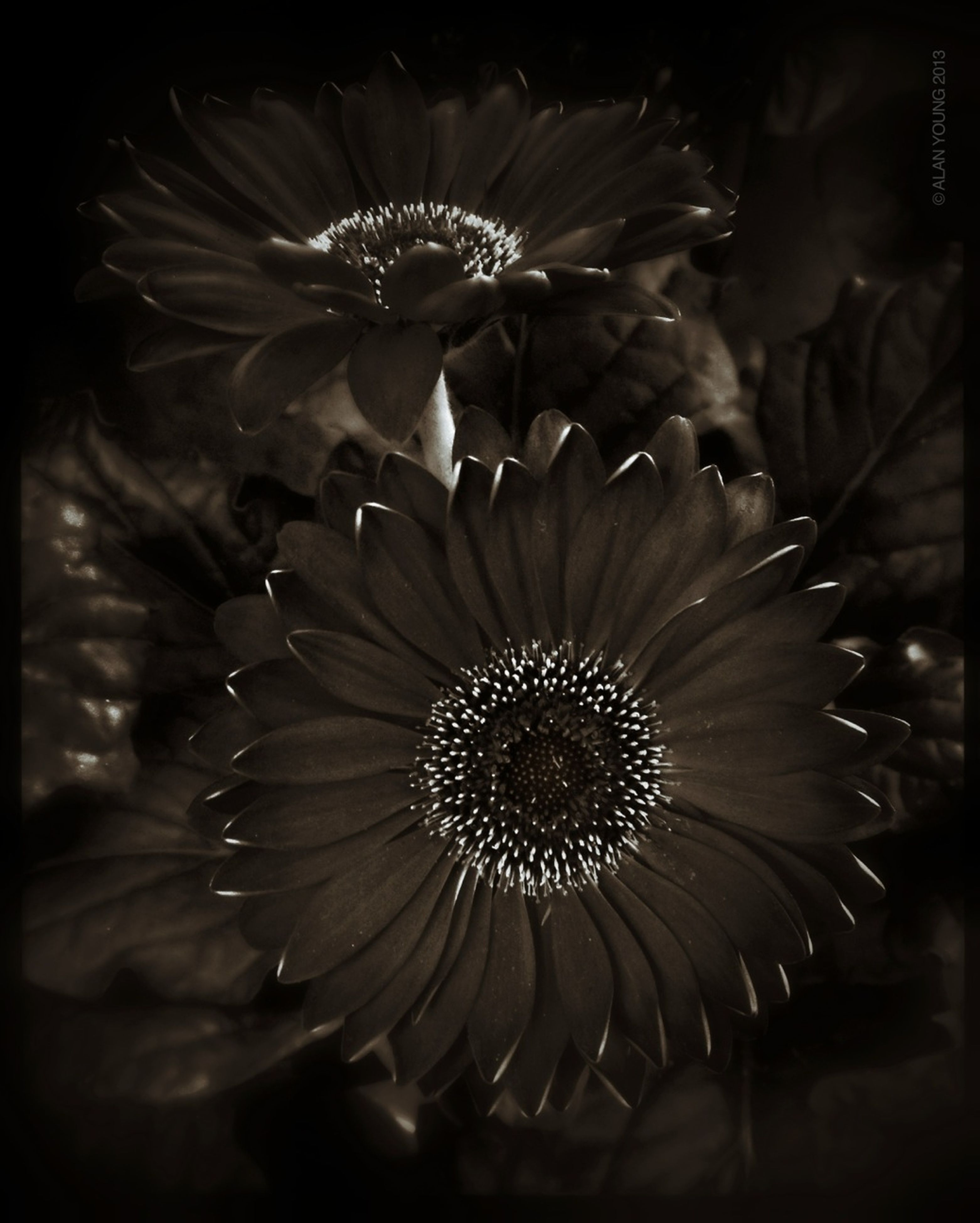 flower, fragility, close-up, flower head, freshness, petal, growth, beauty in nature, transfer print, auto post production filter, nature, focus on foreground, plant, blooming, night, selective focus, in bloom, no people, pollen, single flower