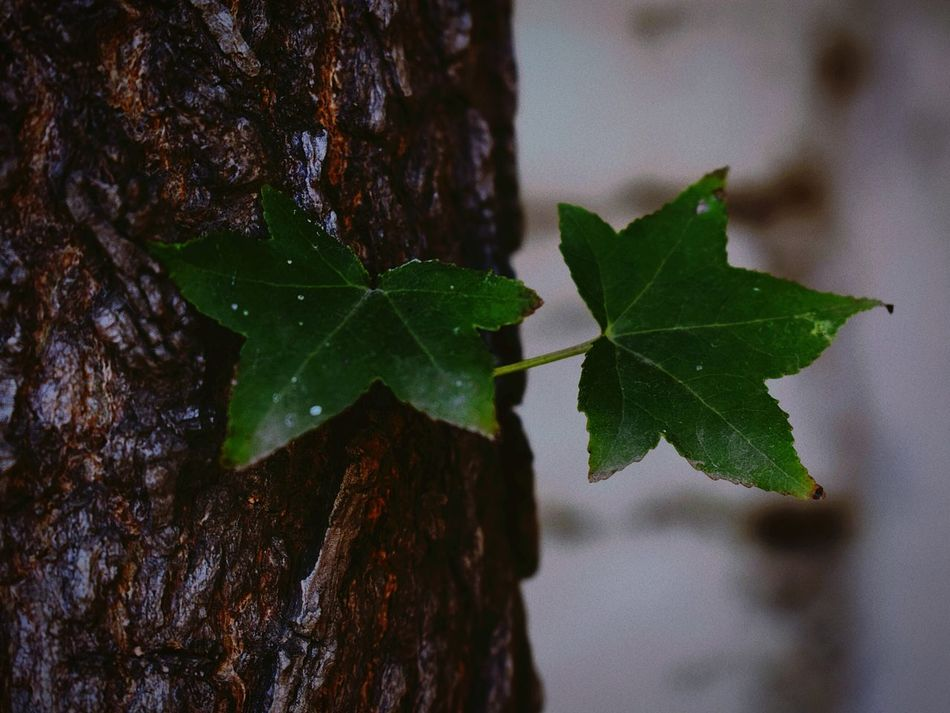 Nature Naturelovers Nature_perfection Naturelover Leafs 🍃 Leafs Photography Leafscape Leafs Green