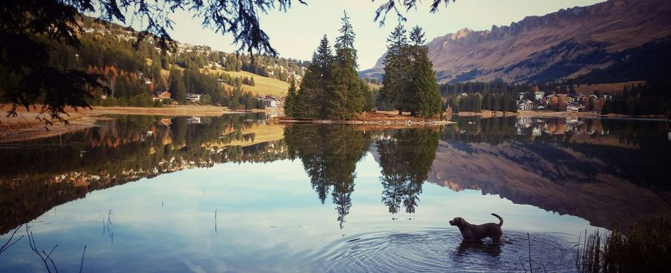 Lake View Water Reflections Water_collection Watercolor Dogstagram Dogs Of EyeEm Hanging Out Taking Photos Hello World Nature Photography Eye4photography  Hello World Switzerland Lenzerheide Heidsee The Great Outdoors - 2016 EyeEm Awards