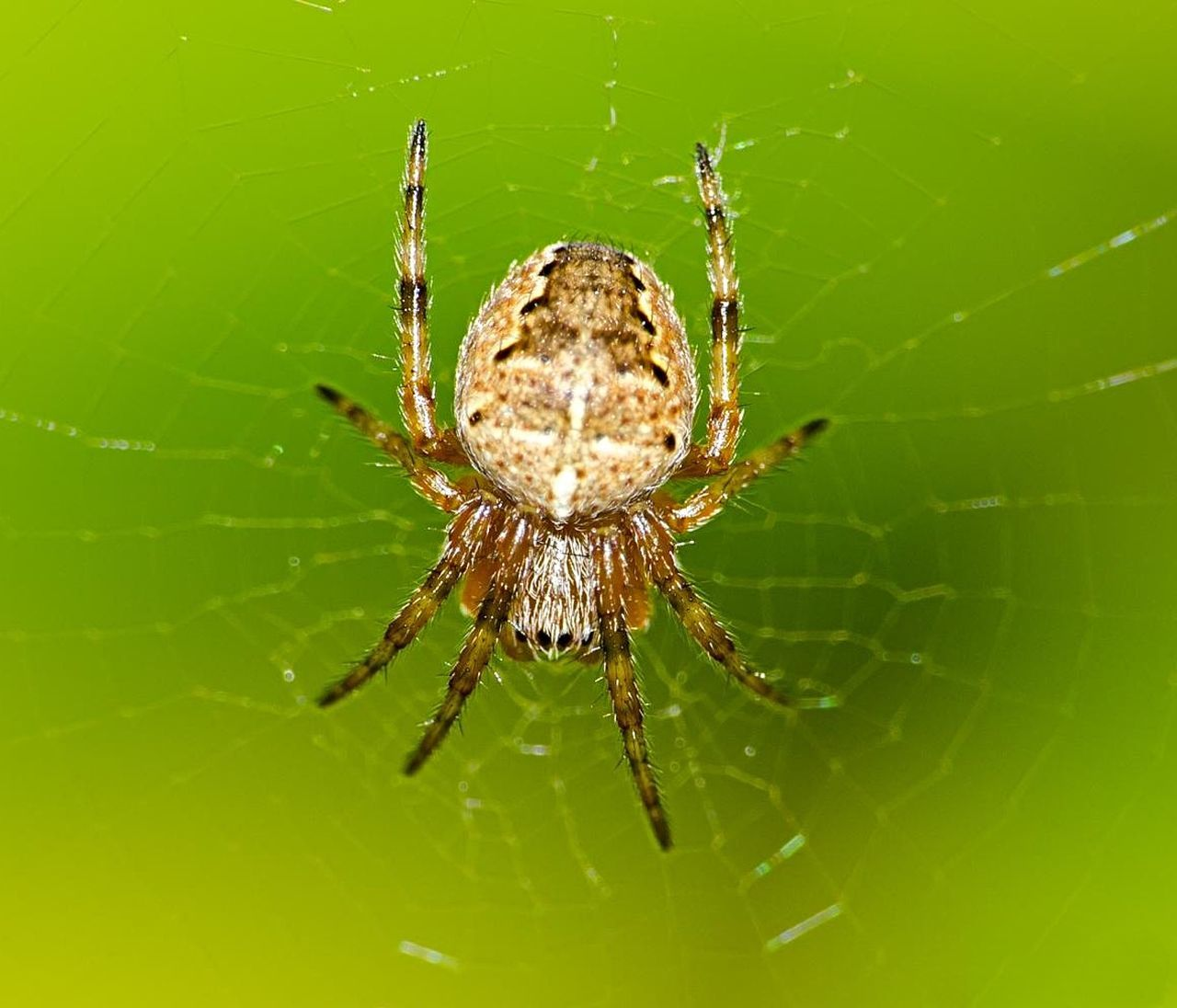 Beautiful stock photos of spider's, Animal Leg, Animal Themes, Animals In The Wild, Danger