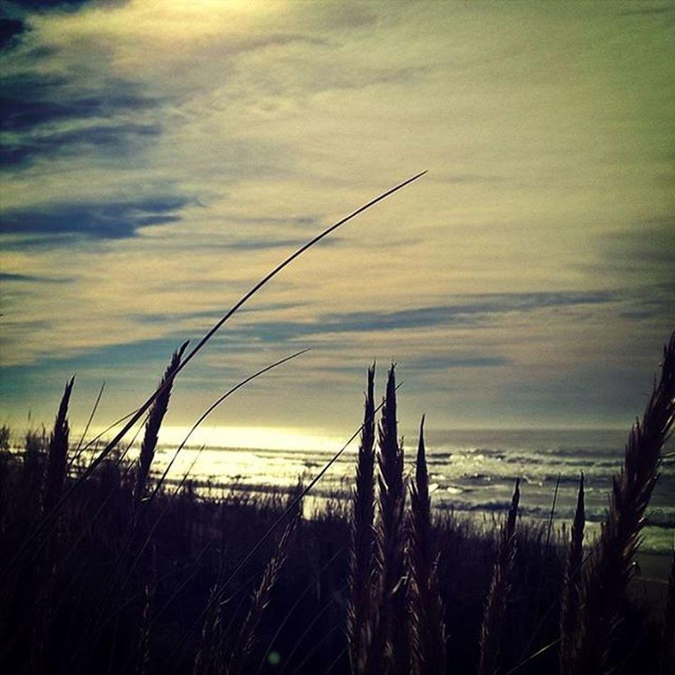 Tout est dit. 🌊 regram @etxebast La Mer peut aller se rhabiller.... L'Ocean vaut tellement mieux. Il m'a tellement manqué. De l'iode. Pour de vrai. Des vagues. Énormes. Pour de vrai. Jesuisdelatlantique Bordeaux Sudouest