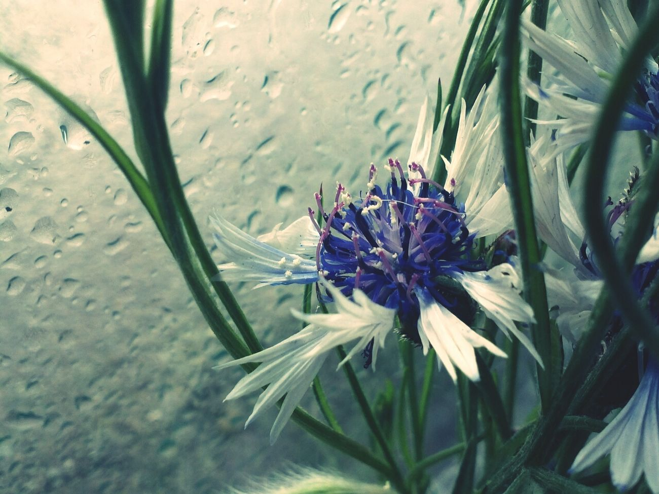 Flowers Nature Rain Drops Quality Time