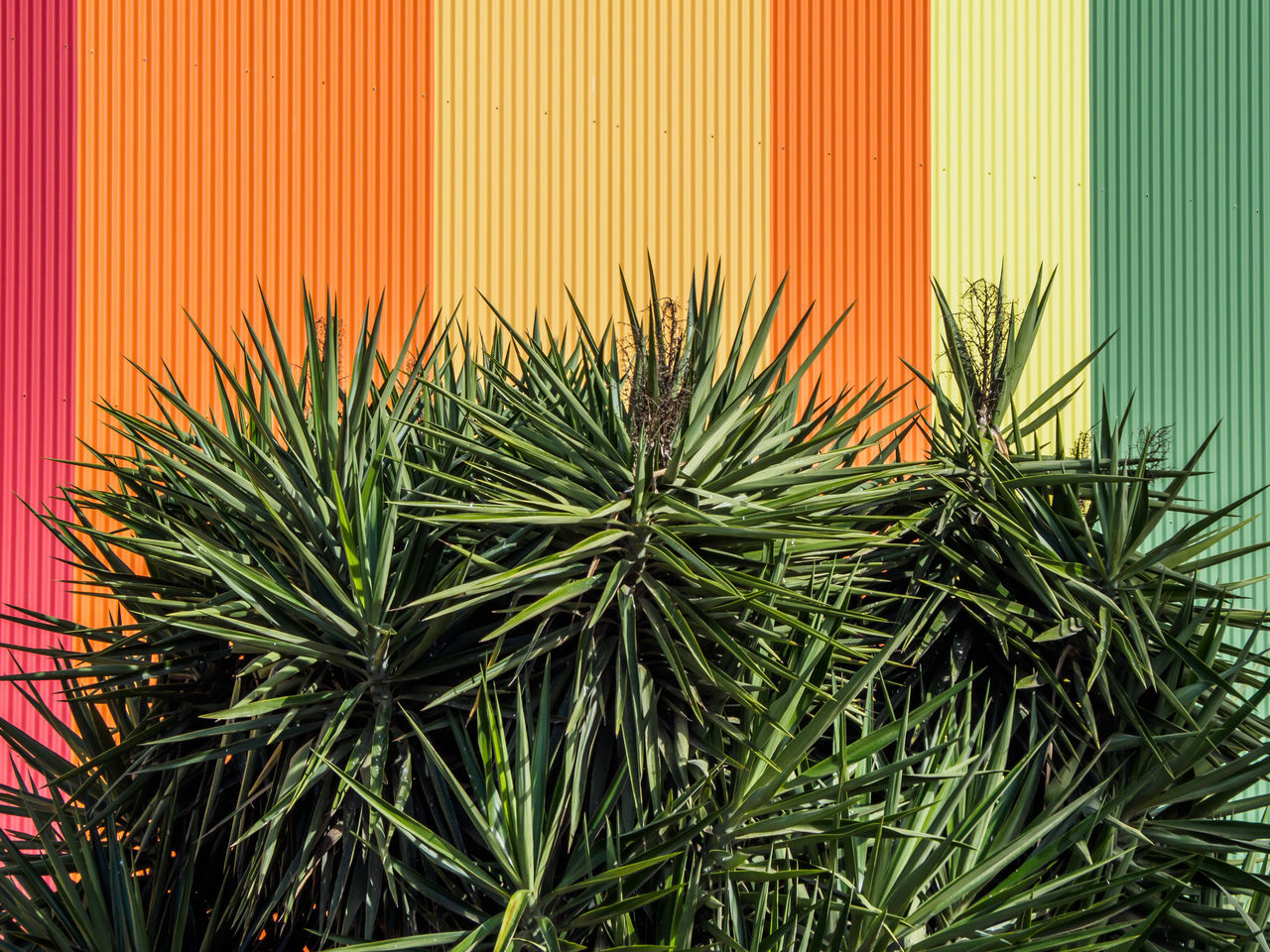 botany colorful Colors Colourful Colours Pattern Pieces Plant pattern multicolored multicoloured Wall coloured wall patterns pattern design Patterns Everywhere Pattern photography