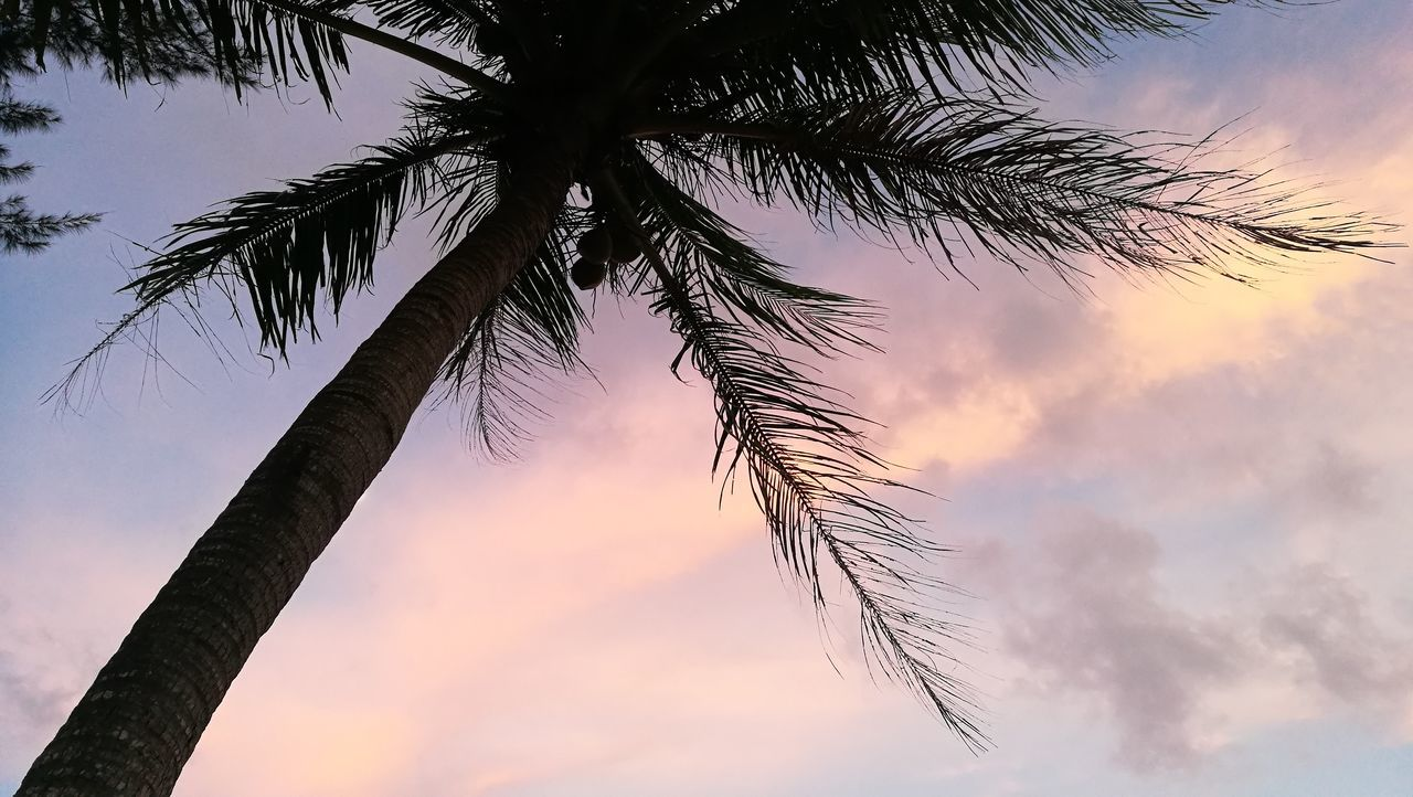 Sky Tree Beauty In Nature Nature 🏖🏝🌅🌞🌝☉🌴 Beach Travel Bankrood