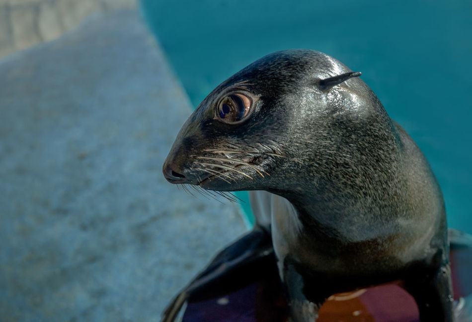 Beautiful stock photos of seal, Animal Themes, Animal Wildlife, Animals In Captivity, Aquarium