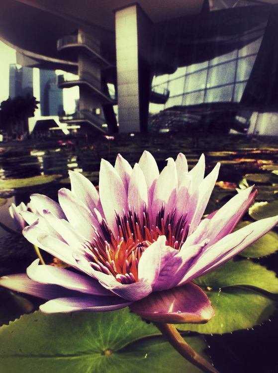 flowers at ArtScience Museum by Joan Lai
