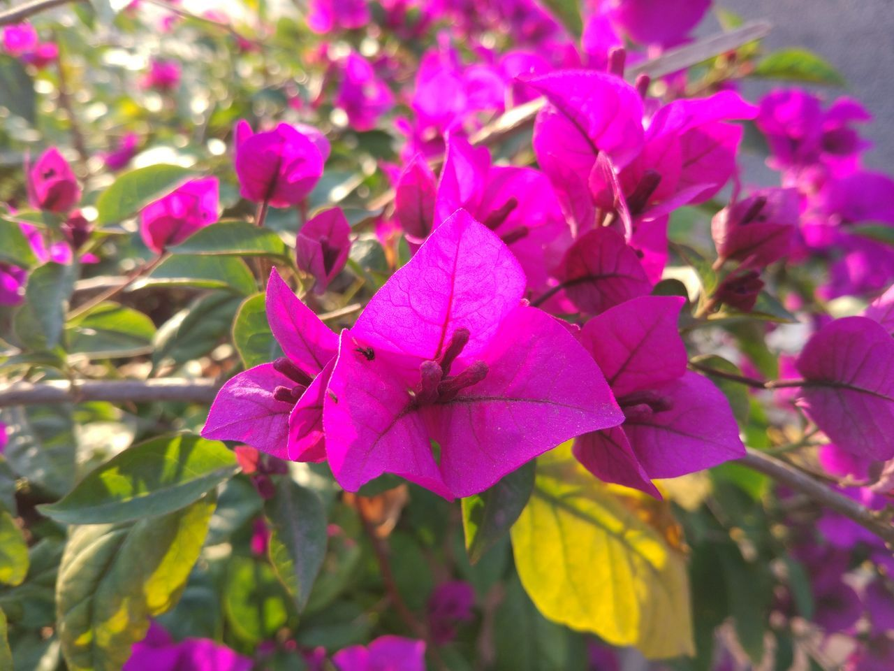 Flower Nature Freshness Petal Flower Head No People Morning MIphotography