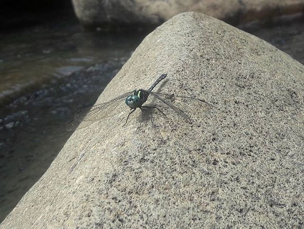 Stone Rocks Backpacker Nature Naturelovers Dragonfly Insect Environment Earth Travel_ph Travelling Natgeo