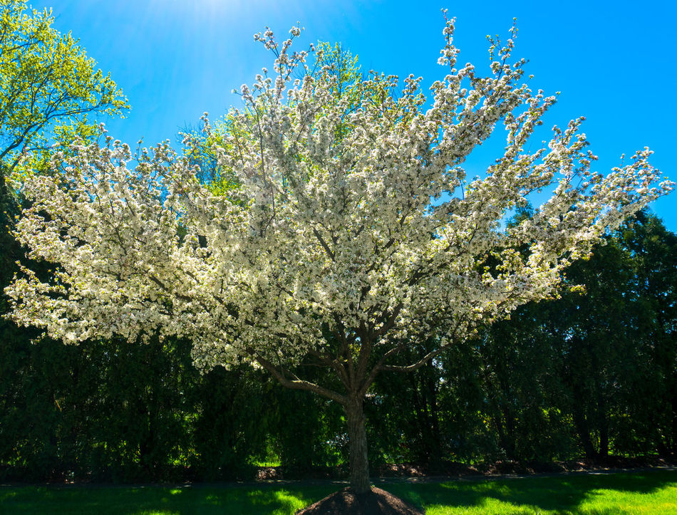 Beauty In Nature Blossom Branch Clear Sky Close-up Day Flower Fragility Freshness Growth Nature No People Orchard Outdoors Scenics Sky Springtime Tranquility Tree