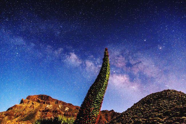 Tajinastes WeWorking Dopephotography Landscape_photography Teide❤ Stars Astrophotography Beauty In Nature Nightphotography Beautiful Tenerife Island Fine Art Photography