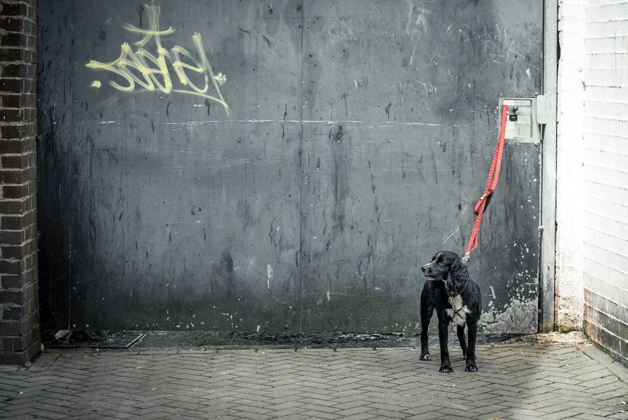 Dog tied up Black Dog City Street Day Desolation Dog Domestic Animals Doorway Full Length Grey Leash Lonely Outdoors Sad Standing Street Tied Urban Watchdog